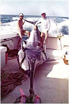 World and Australian record and Heaviest fish for Cairns 1973 season